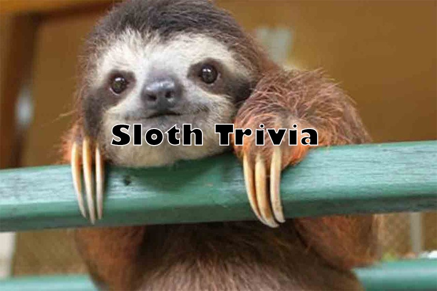 Test Your Sloth Knowledge