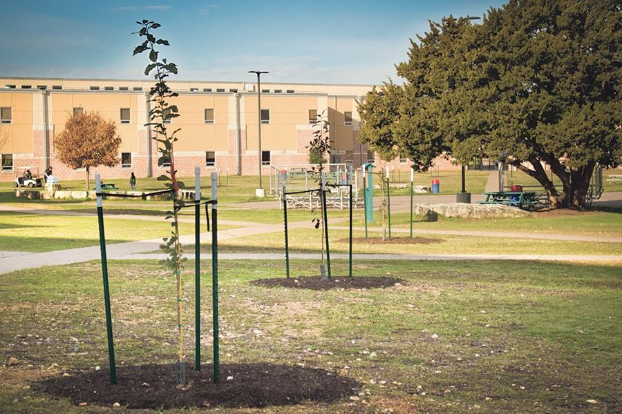 Newly planted trees take root at Akins. Students and community volunteers worked over a weekend in December to plant the 47 trees donated by the City of Austin.