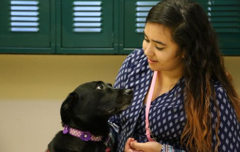 Service dog brings happiness to Akins' students