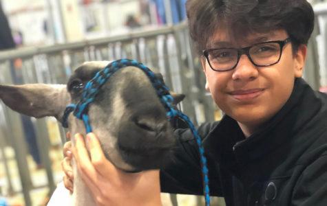 FFA raises livestock, earns money for college, program