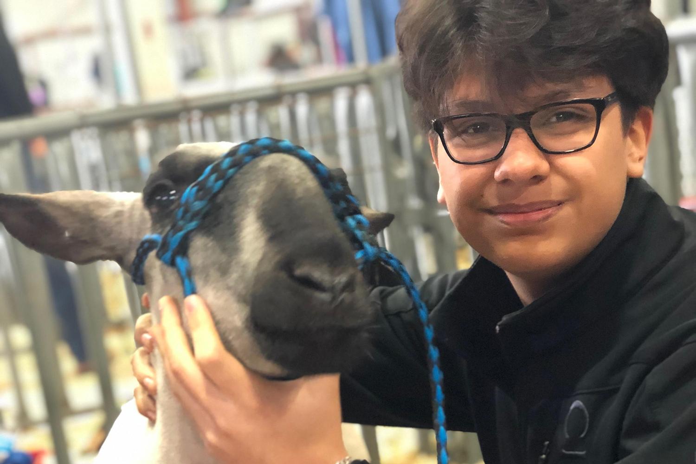 Sophomore Alejandro Santos shows a market goat