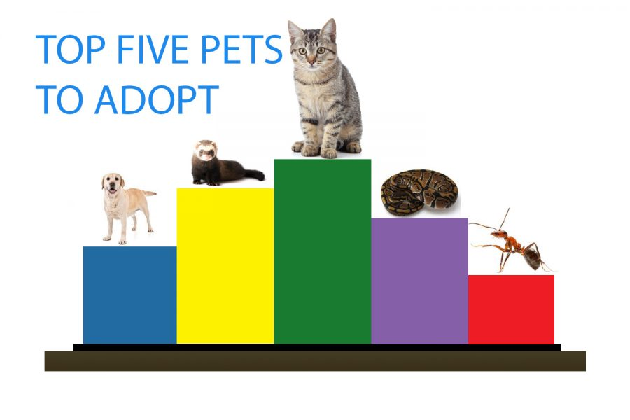 Spending time isolated at home presents a good time to adopt a pet to help inspire motivation.